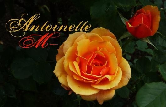Gold rose copy