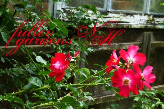 red briar rose copy